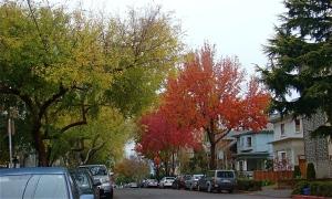 Autumn trees Berkeley