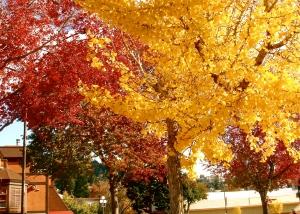 Tree Colours
