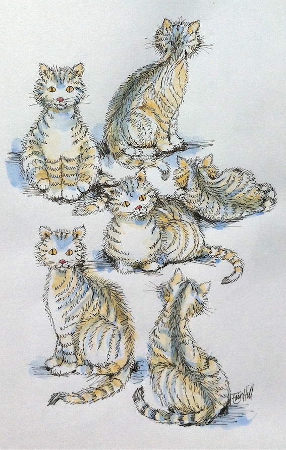 Milo the Cat. Latest sketches
