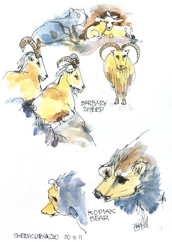Barbary Sheep, & Kodiak Bear