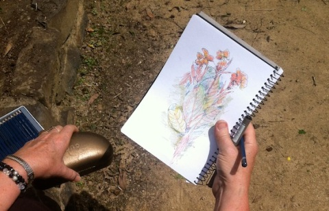 Jan's Lily botanical sketch