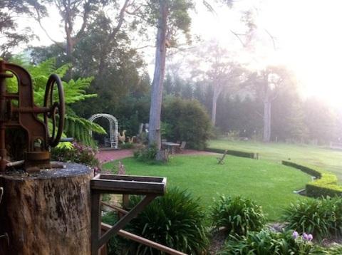 Sunrise mist over the garden