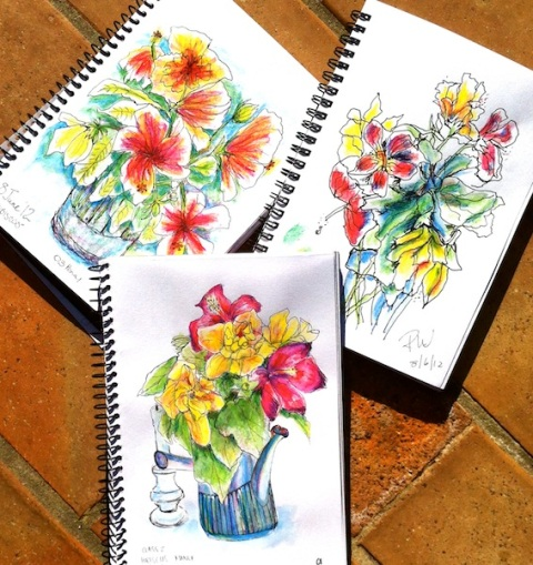 Hibiscus Sketches, line and watercolour pencil