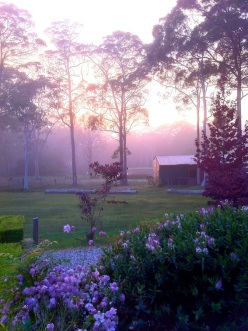 Morning Mist Bilpin Springs Lodge