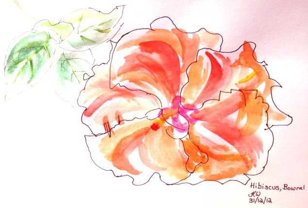 Katherine. Hibiscus in Bowral