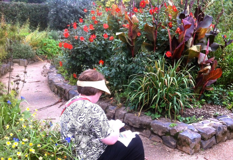 Sketching Canna lilies