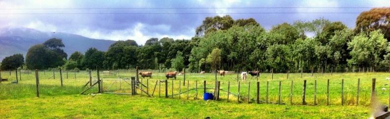 Across the fields. Te Horo