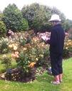 Elizabeth of Glamis Roses