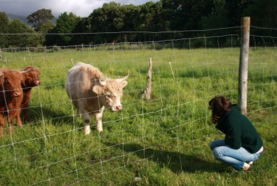 Joanna and Scottish Highland cattle