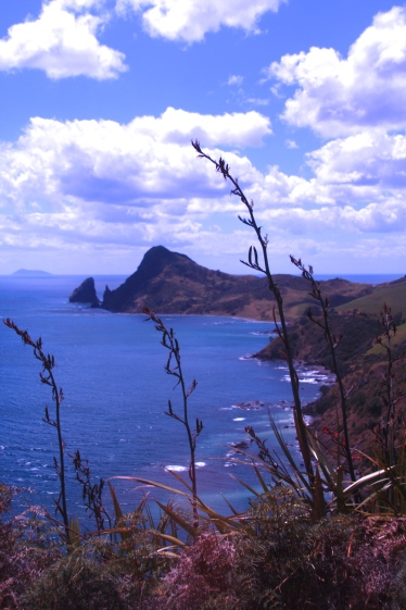 On the Coromandel Walkway Tour