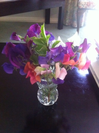 Sweet peas. Havelock House