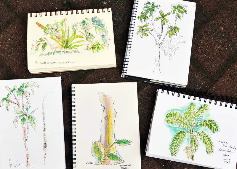 Thursday 1. More nature sketches