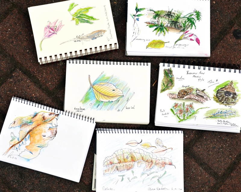 Thursday 1. Nature sketches