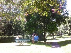 Under the Crepe Myrtle Tree