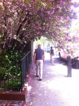 Avenues of blossom