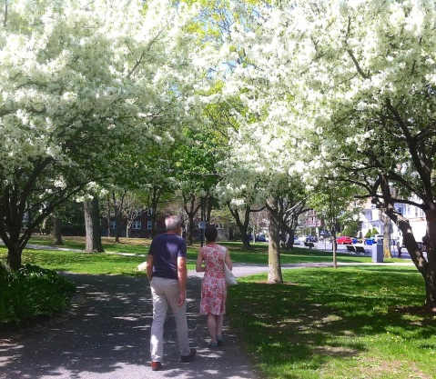 Blossoms at Somerfield Boston