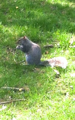 Squirrels in the parks