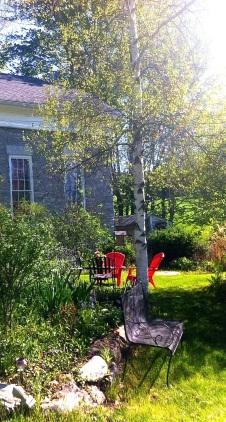 Sunshine through the garden