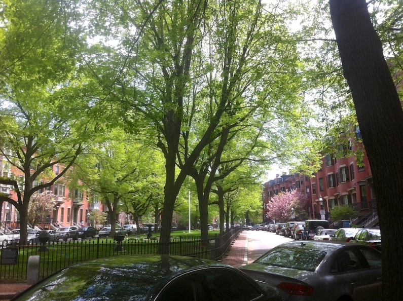 Tree lined streets South End