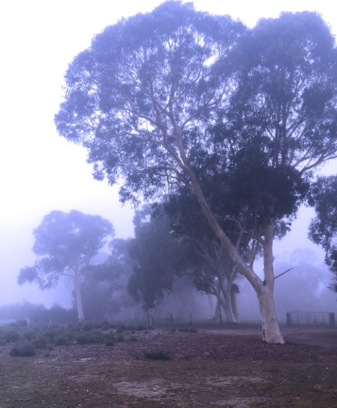 Early morning Banksia Park