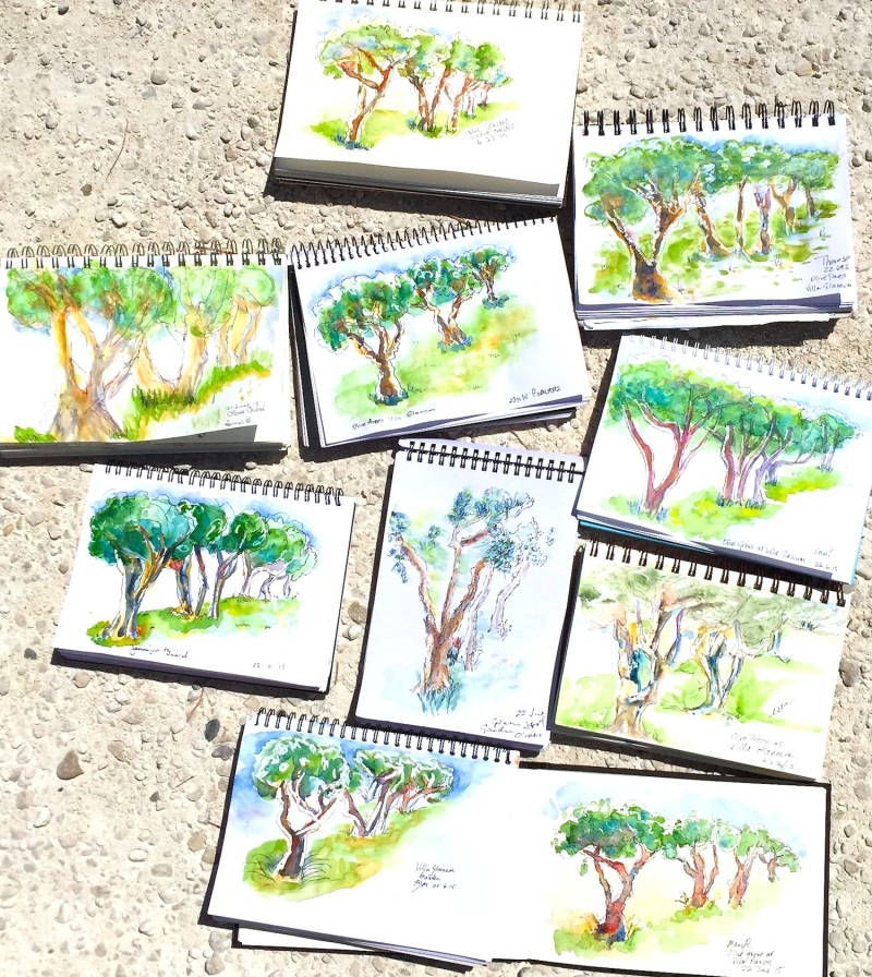 Monday. Sketches from the olive grove