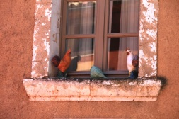 Saturday Roussillon window