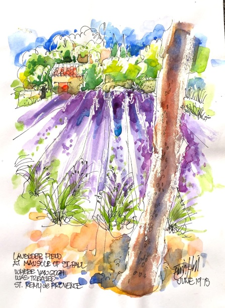 St Remy de provence. Lavender at Van Gogh institutionIMG_6082