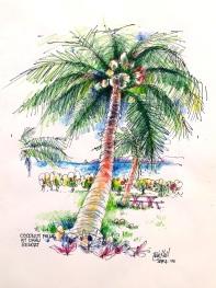Coconut palm outside my window