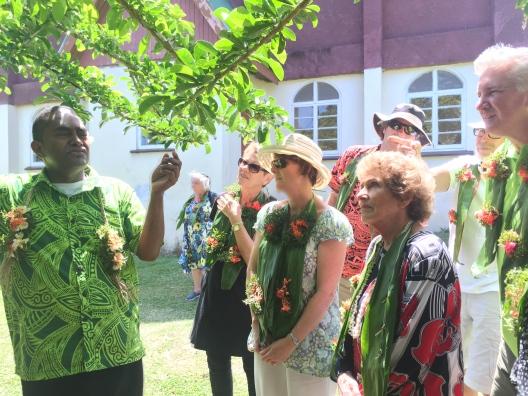 Thursday Fiji. Medicinal Tree