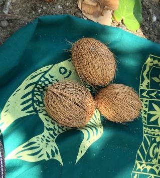 Wednesday Fiji. Baby coconuts