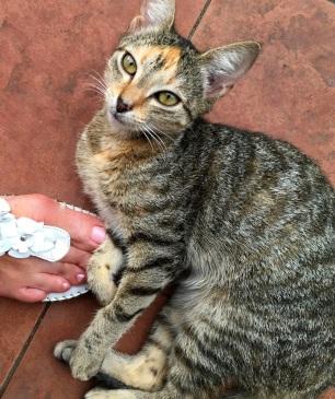 Wednesday Fiji. Josh the Daku kitten