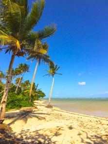 Wednesday Fiji. Palms and sand