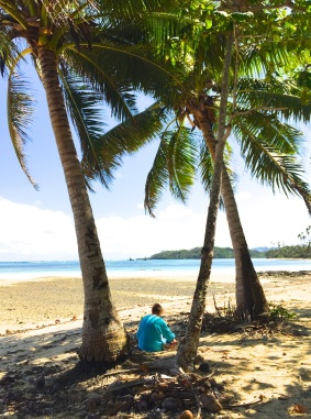 Wednesday Fiji. Undera coconut palm
