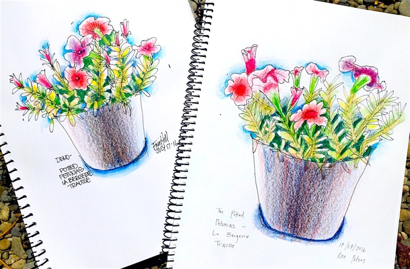 Petunias. First sketch