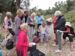 Kalymos olive trees