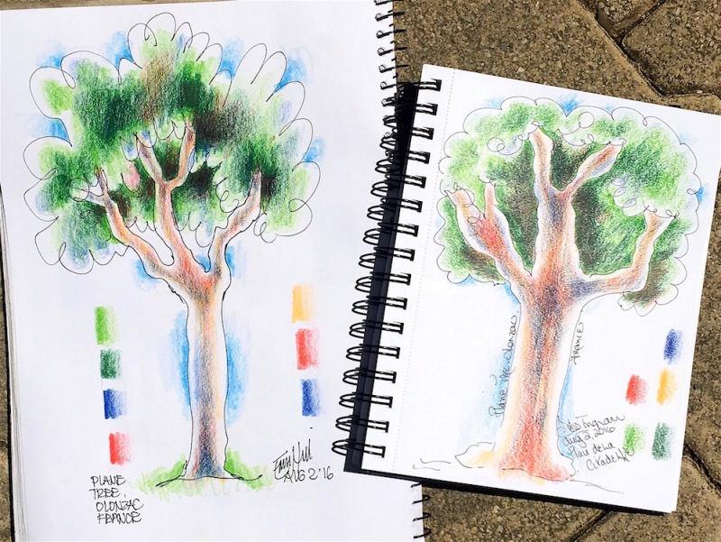 Plane Tree 2