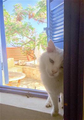White cat visitor